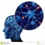 Apprendre toute sa vie pour un cerveau performant