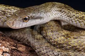 Attitude honnête vaux mieux que...Les serpents