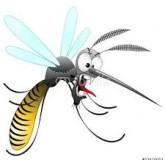 Moustique, parasite silencieux ?