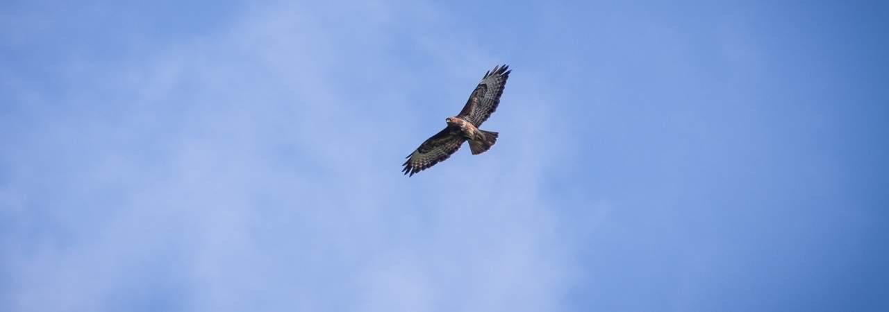 Transforme ta vie pour déployer tes ailes