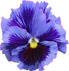 La vie est belle comme les fleurs