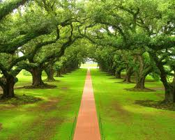 Imagination, création, l'arbre à idées