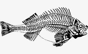 avarice et arrête de poisson