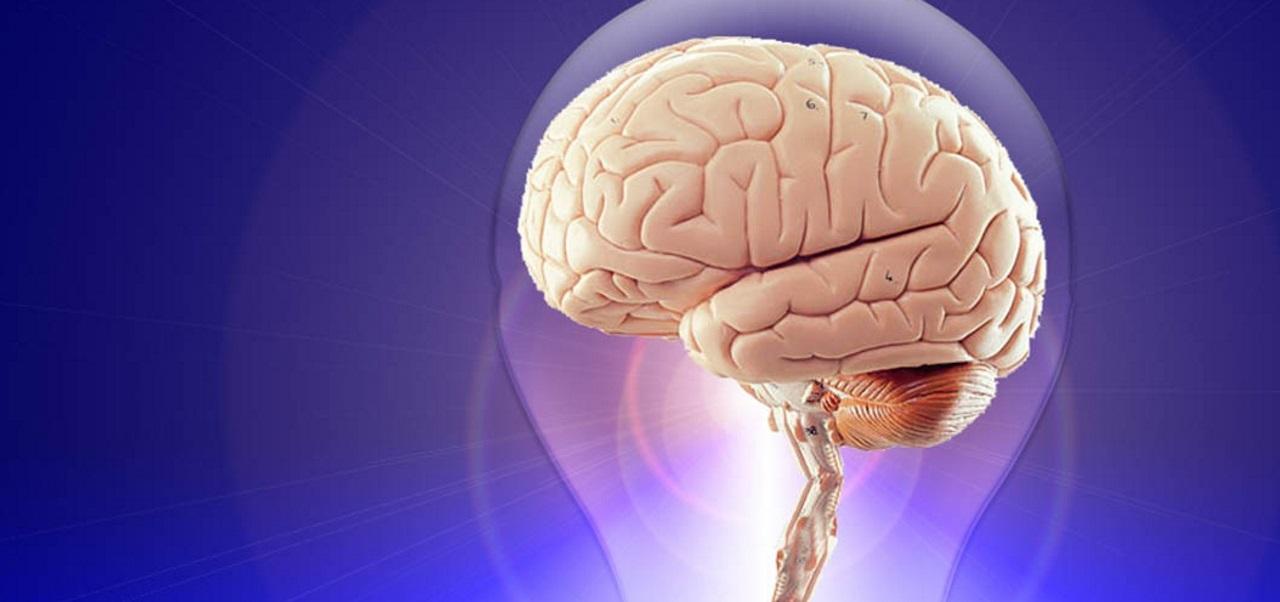 Cerveau en révolte