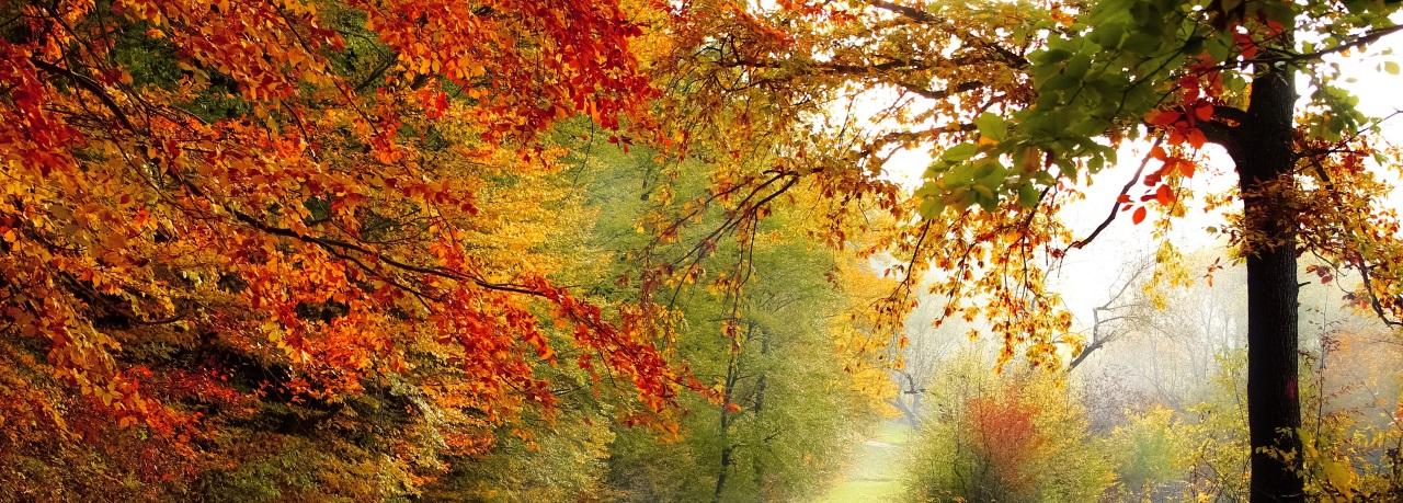 Equinoxe d'automne : équilibre entre maturité et sagesse