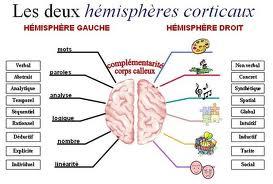 Cerveau musicien : fonctionnement cerveau