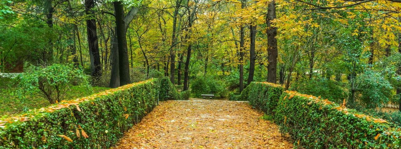Chemin de vie, sens et cohérence de nos parcours